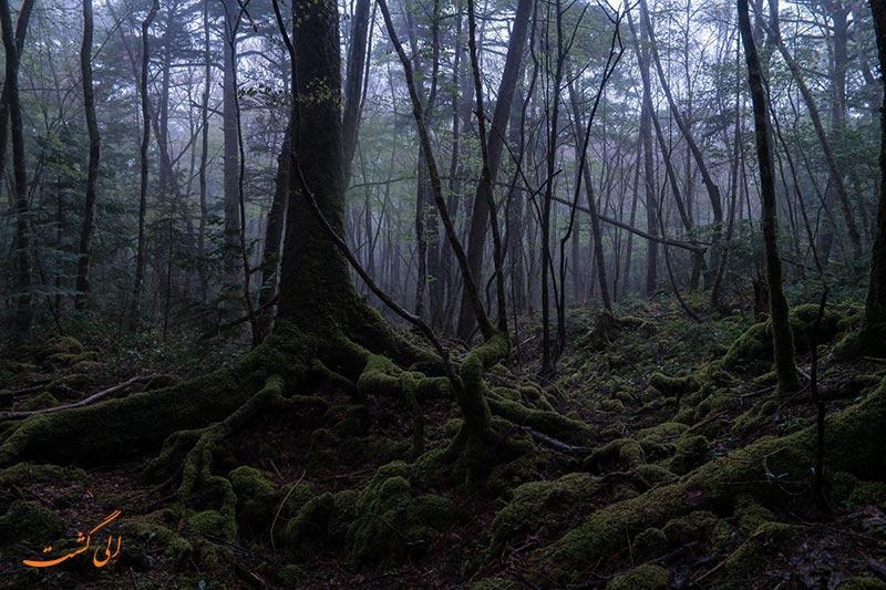 جنگل آئوکی گاهارا در ژاپن