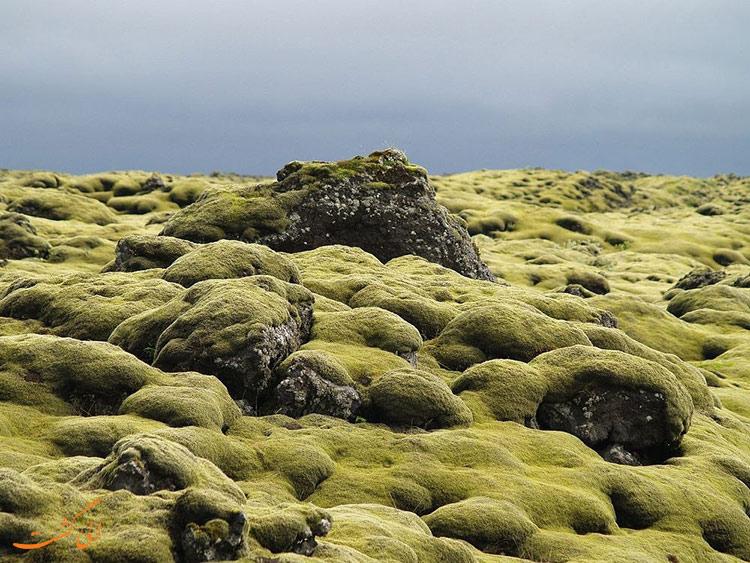 زمین های خزه ای در ایسلند