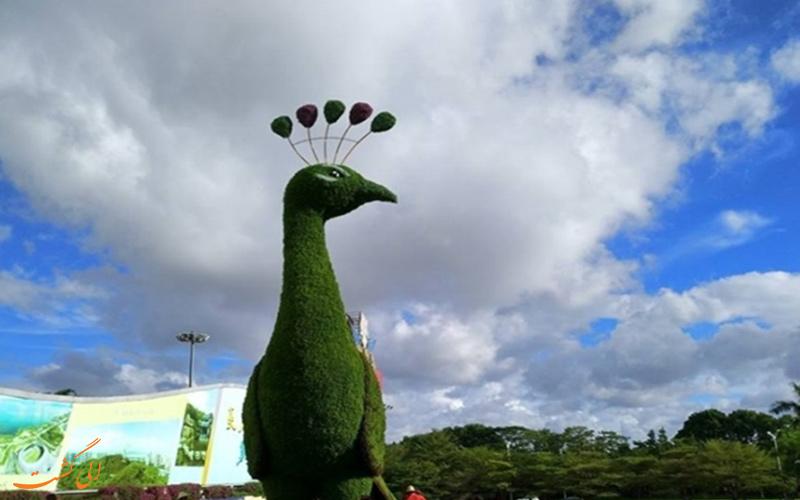 طاووس گیاهی