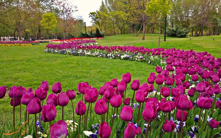 پارک مشهد