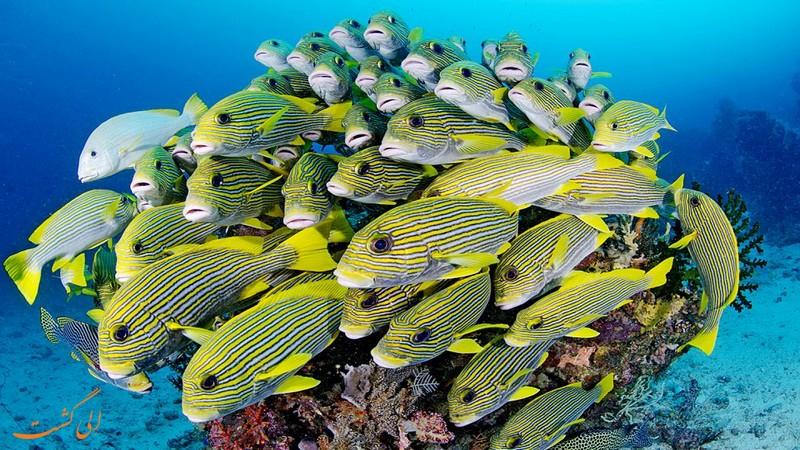 حیات دریایی راجا امپات