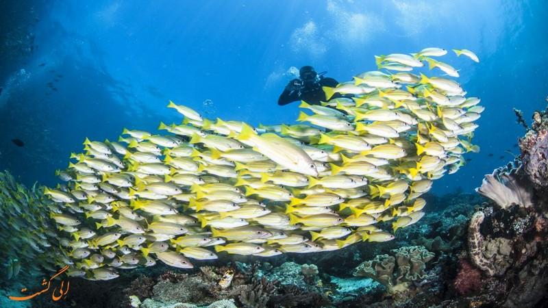 حیات دریایی در راجا امپات