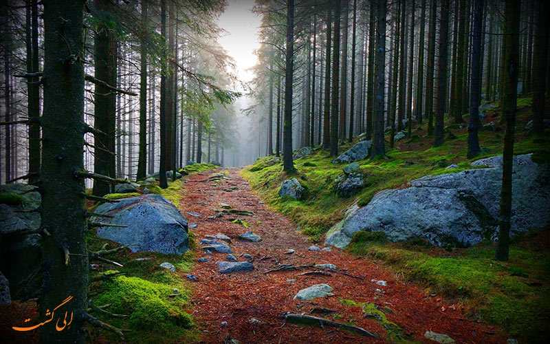 عکس جنگل سیاه آلمان