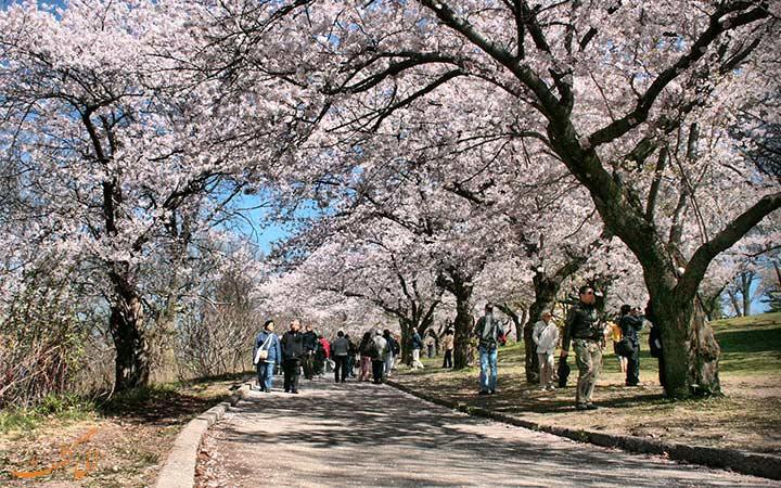 بهار در تورنتو