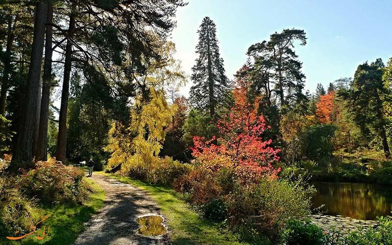 جنگل Bedgebury