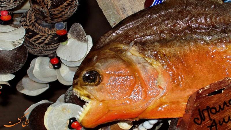 ماهی های پیرانا
