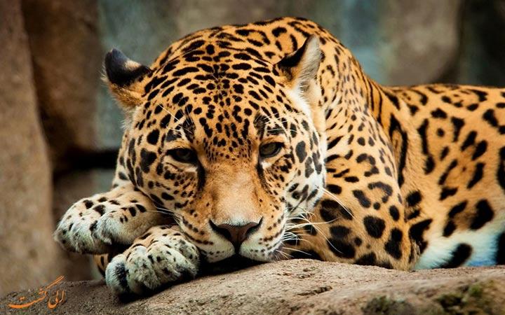 نادر ترین گونه های حیوانی ایران