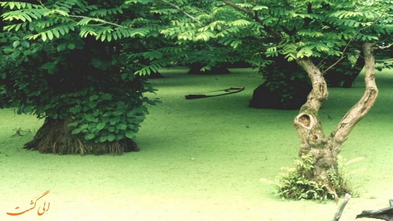 دریاچه متحرک آستارا