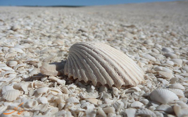 ساحلی پر از صدف در استرالیا