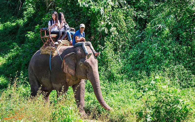 فیل سواری در چیانگ مای