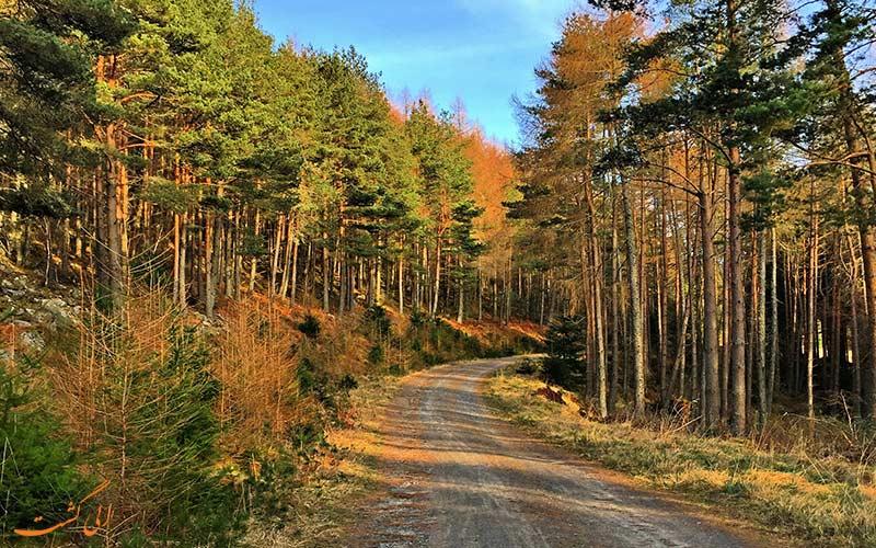 جنگل فاسکالی