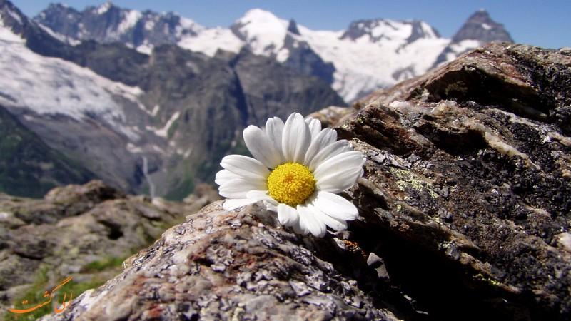 پوشش گیاهی اطراف دریاچه کوه گل