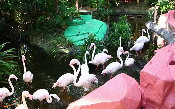 پارک حیات وحش و بهشت پرندگان