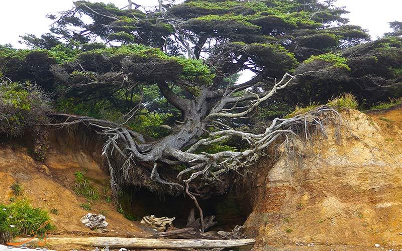 درخت زندگی