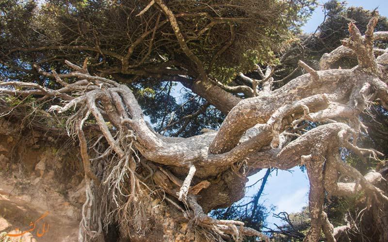 ریشه های درخت
