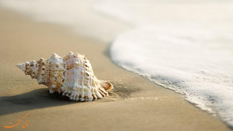 ساحل صدف