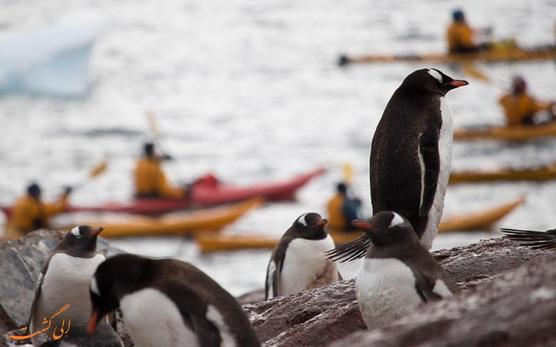 کایاک سواری در میان پنگوئن های قطب جنوب