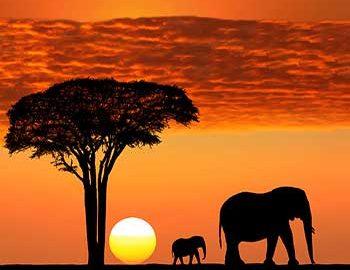 طبیعت تانزانیا