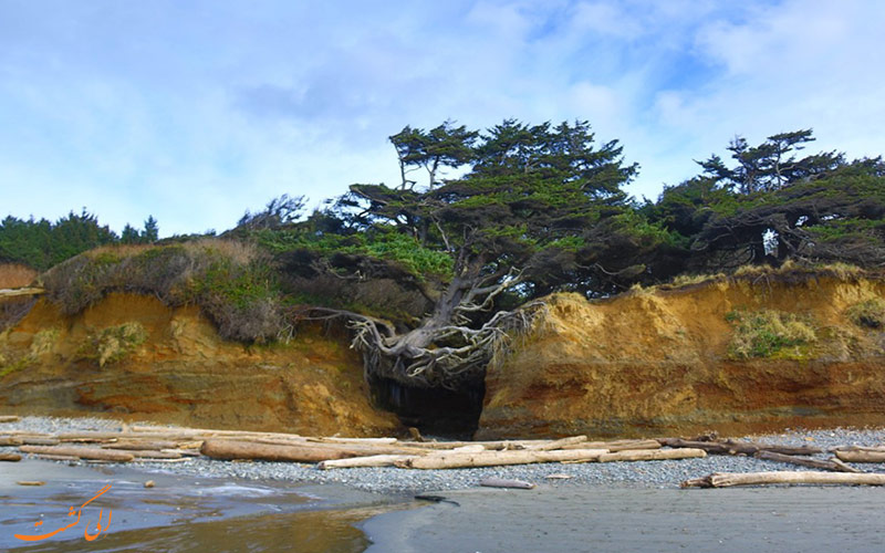 درخت زندگی در آمریکا