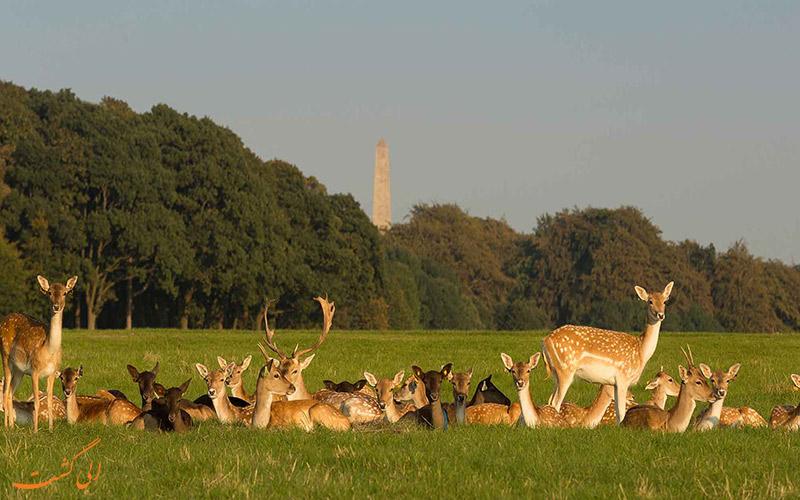 پارک فوانیکس و باغ وحش دوبلین