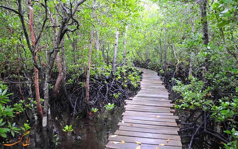 جنگل های جوزانی