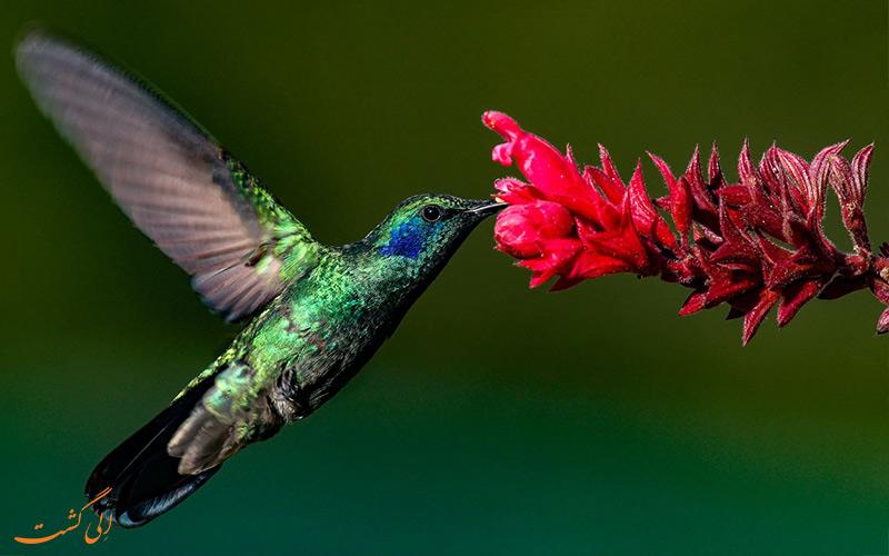 پرنده خاصی در ماداگاسکار