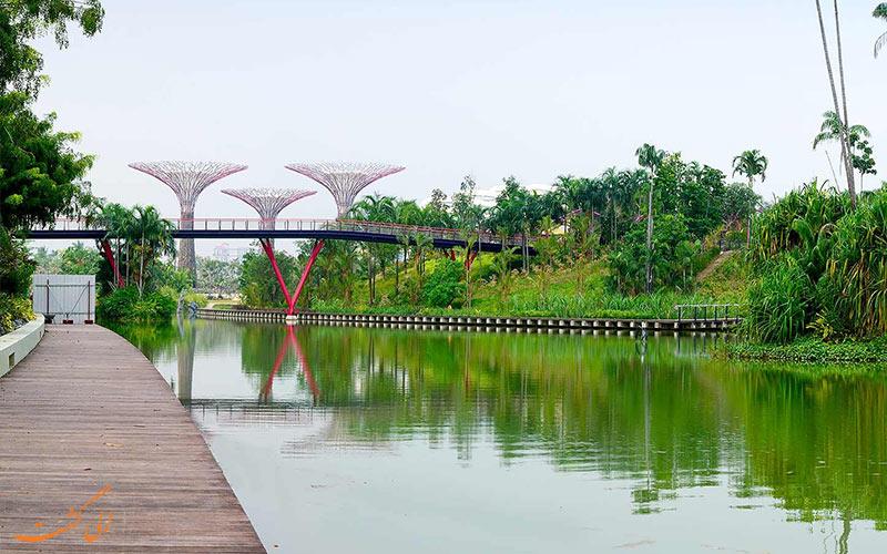 دریاچه سنجاقک سنگاپور