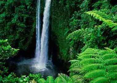 آمازون برزیل