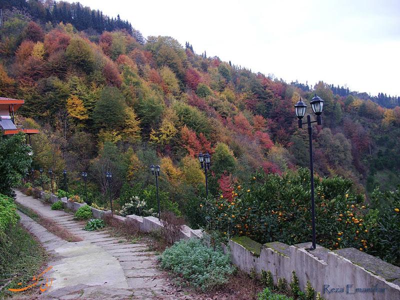 عکس های جنگل دالخانی