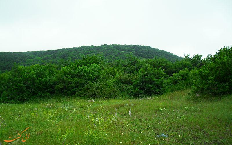 جنگل سرسبز فندقلو