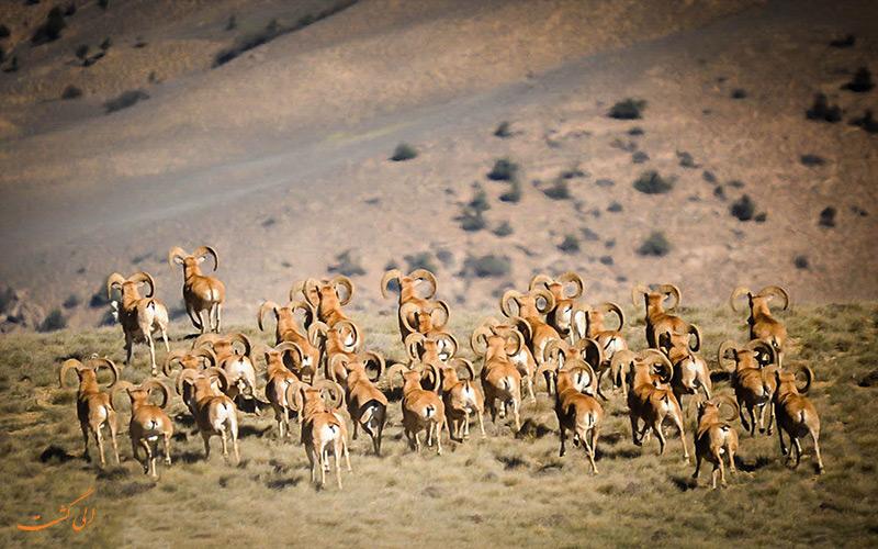 گونه های پارک ملی گلستان