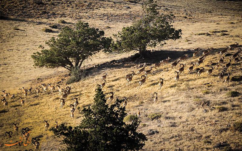 حیوانات پارک ملی گلستان