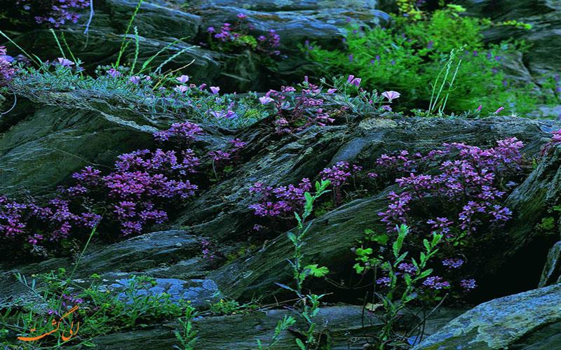 گیاهان پارک ملی گلستان