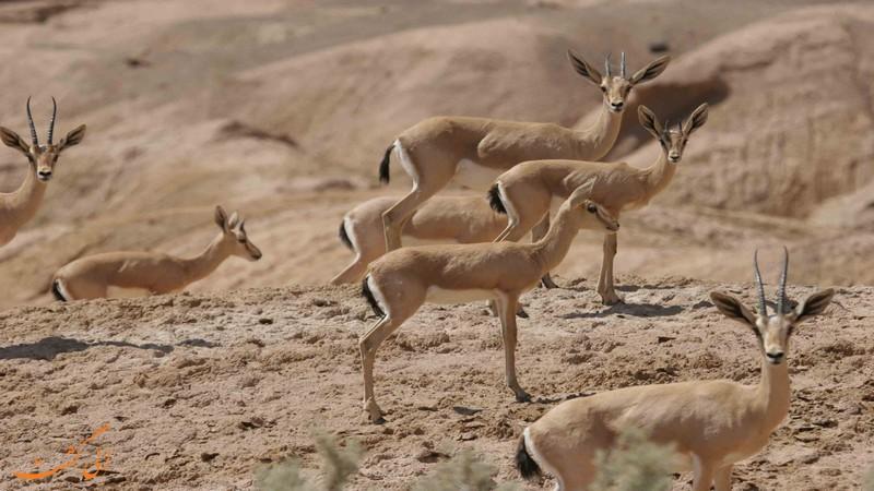 حیوانات پارک ملی کویر