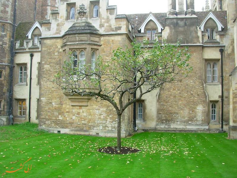 محل درخت سیب نیوتون