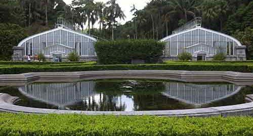 باغی در برزیل