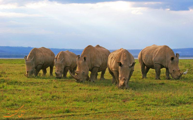 حیات وحش کنیا | کرگدن
