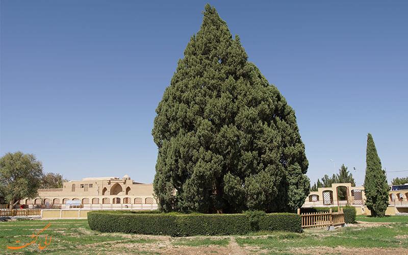 سرو ابرکوه در استان یزد