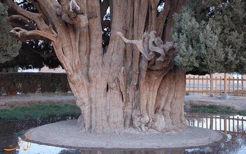 ابرکوه در استان یزد