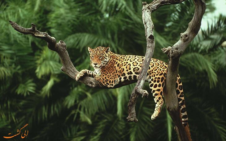 طبیعت گردی آمازون