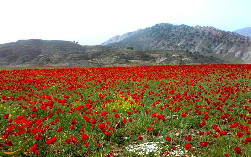 روستای آبدانان در ایلام