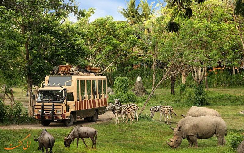 جزیره بالی - نکات سفر به بالی