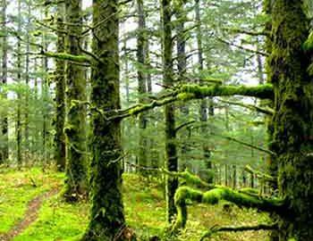 جنگل در ایران