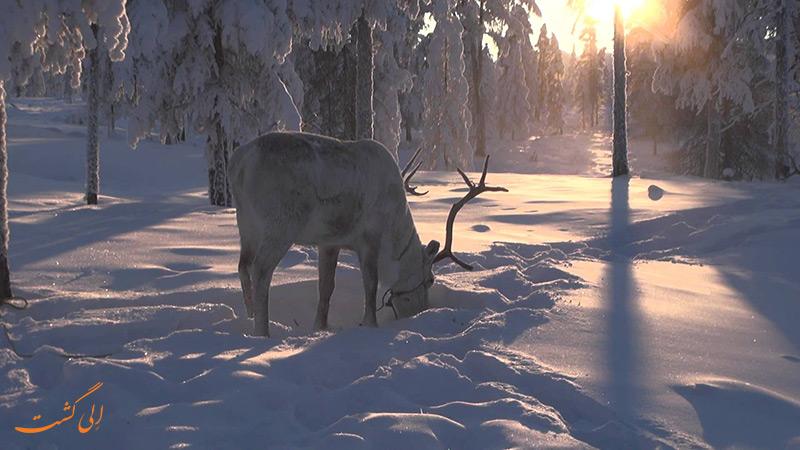حیوانات سردترین منطقه مسکونی جهان