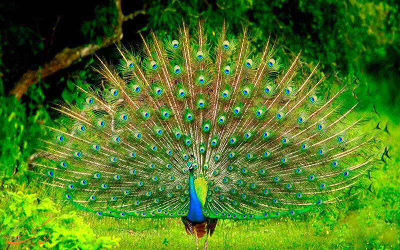 تنوع جانوری در سریلامکا