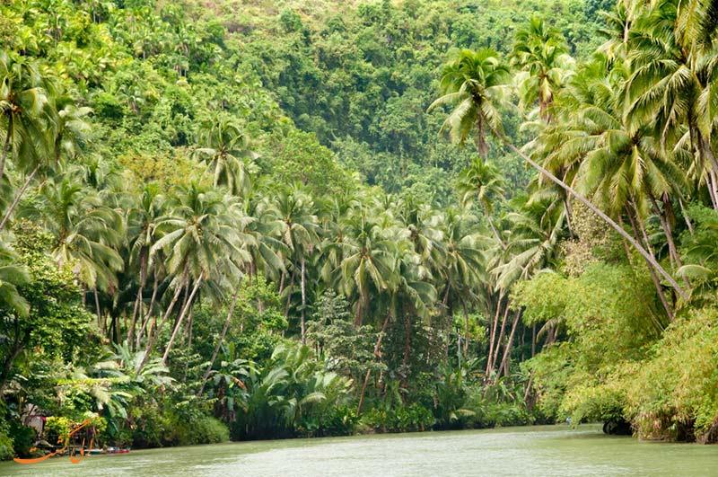 جنگل های زیر آب رفته ی آمازون