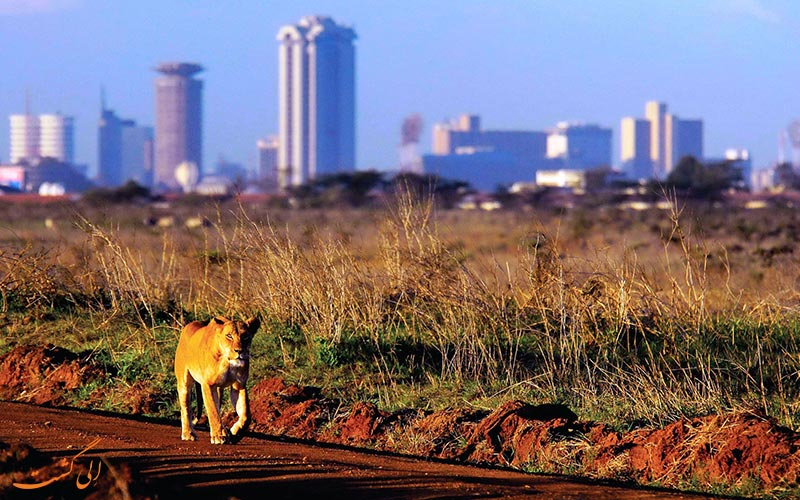 شهر نایروبی پایتخت کنیا