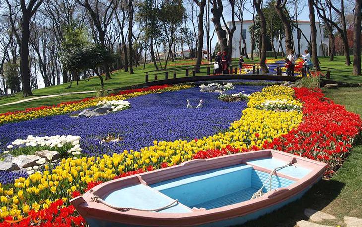 گل لاله در استانبول
