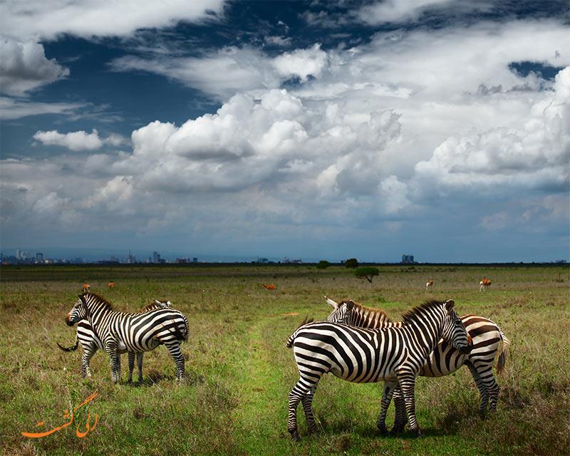 پارک ملی نایروبی کنیا