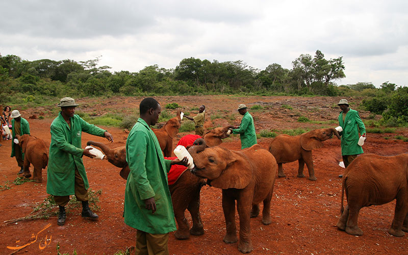 شرکت نگهداری و نجات David Sheldrick Wildlife Trust